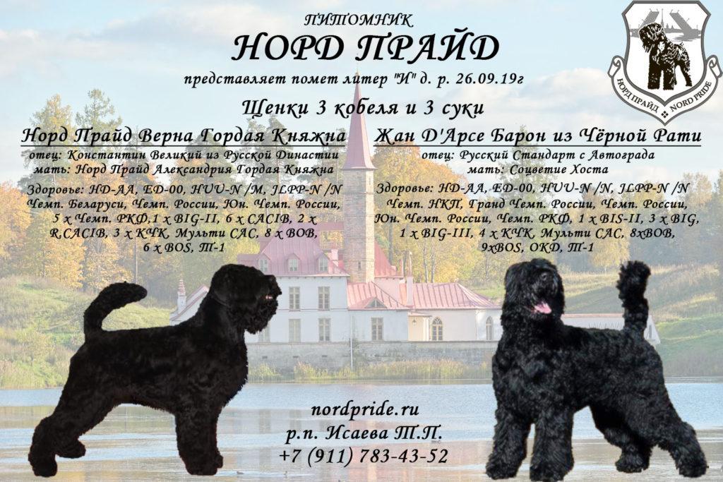 Норд Прайд Щенки 26.09.19