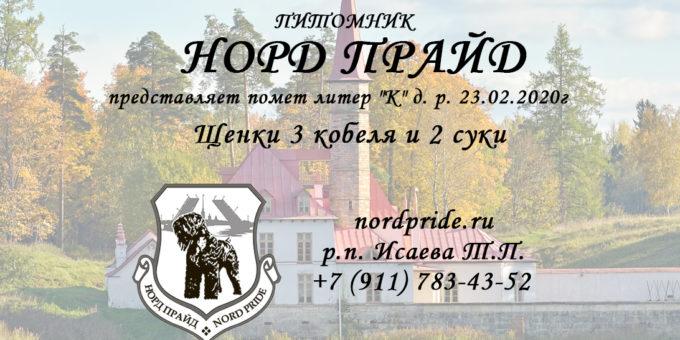 Норд Прайд Щенки