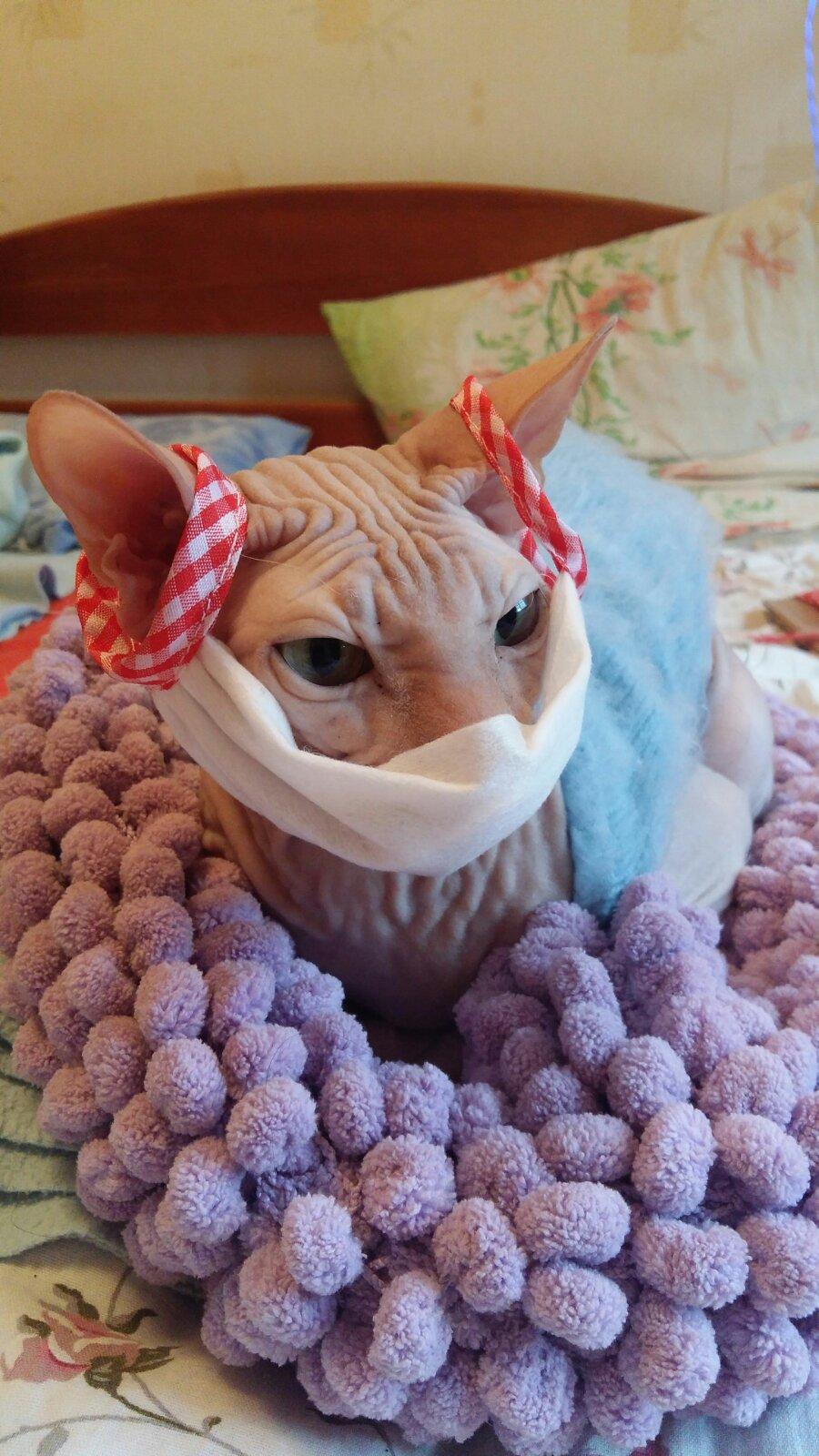 Болеют ли собаки или кошки коронавирусом