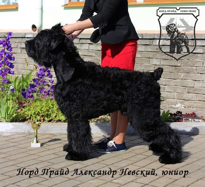 Норд Прайд Александр Невский