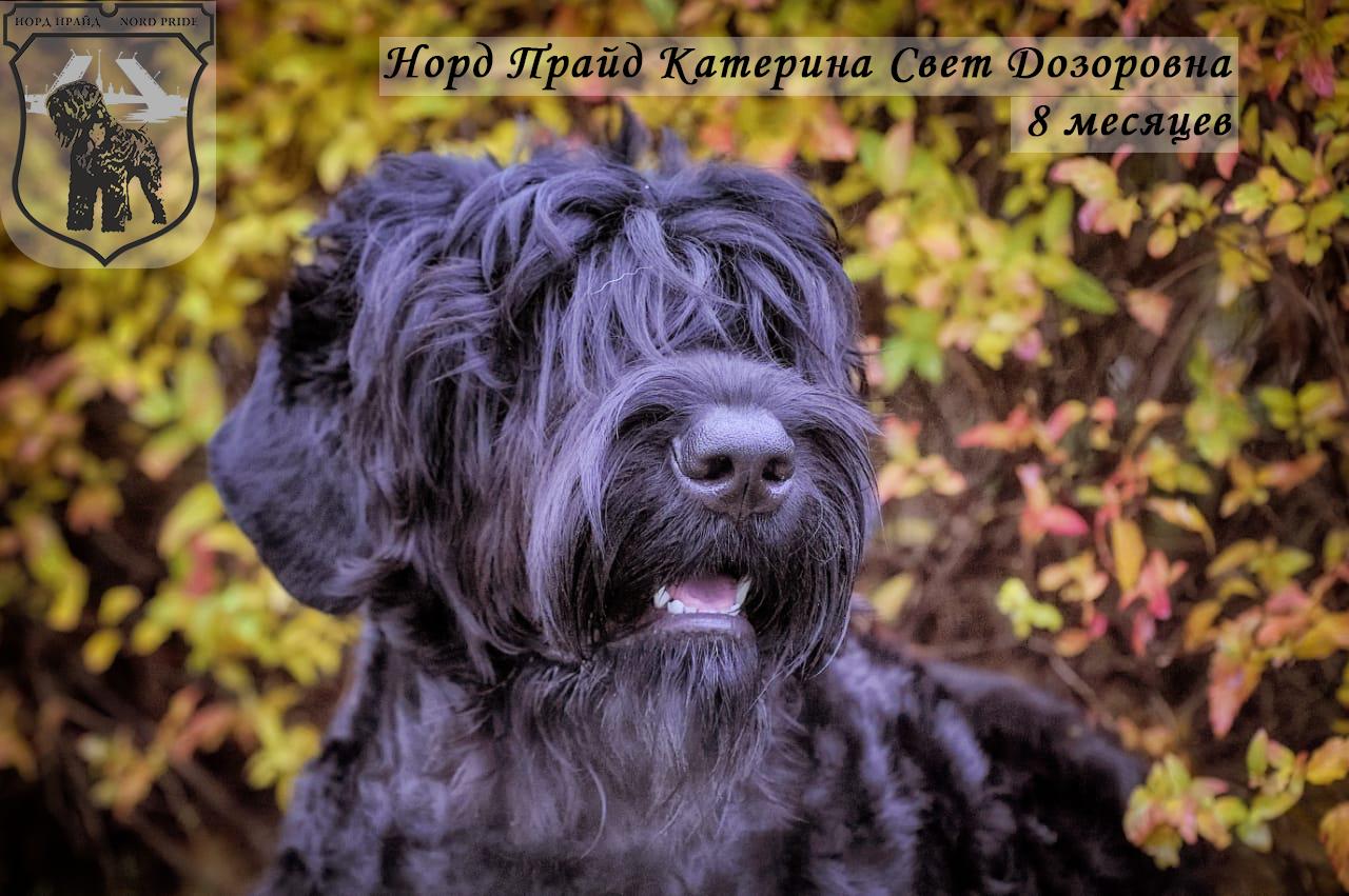 Норд Прайд Катерина Свет Дозоровна-8 мес